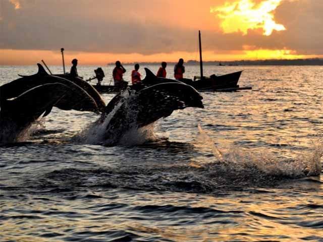 Dolphin Lovina Beach