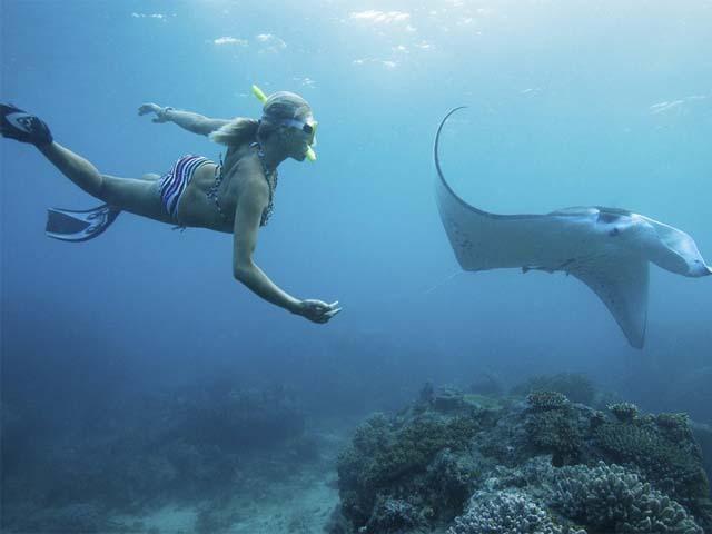 Manta Point Snorkeling