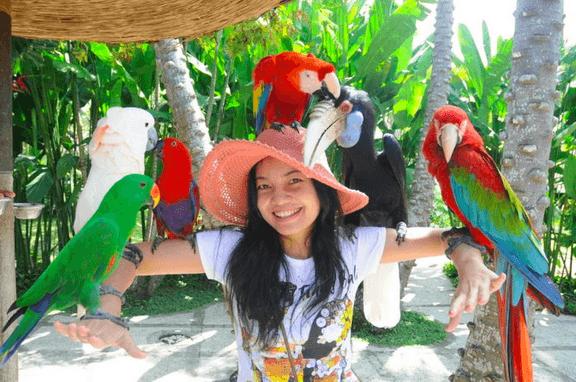 Kakatua-Bali-Bird-Park