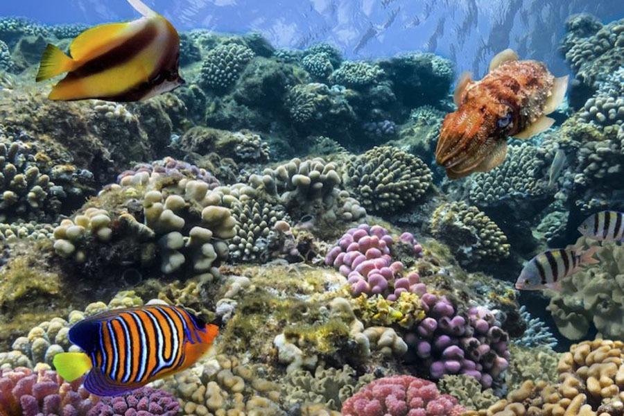 buyuk diving