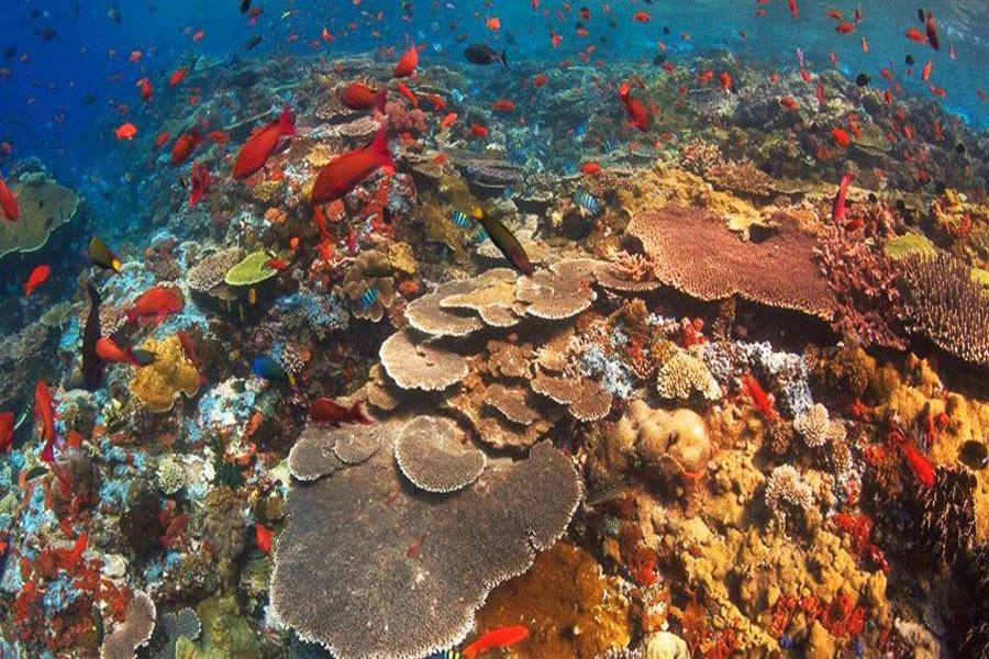 gamat bay diving