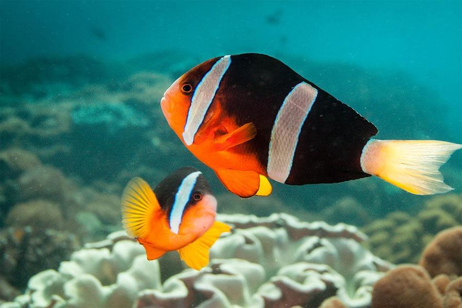 sampalan diving